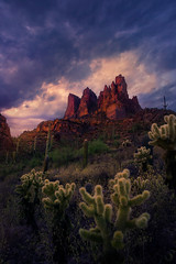 Refuge (Exploring Light) Tags: superstition mountain cactus arizona stormy sky sunset cholla red green blue chrismoore exploringlight photography fineart landscape prints limitededition superstitionmountains2017