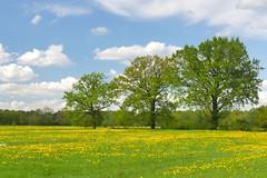 eine andere Seite von  Hamburg/ the other Side of Hamburg (sabine1955) Tags: hamburg frühling spring bäume trees gelb yellow blau blue wolken himmel sky clouds wiese maedow