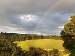 Easter Rainbow, New Zealand (scinta1) Tags: rainbow green hillside northland ngungaru pinetrees evening light northlandnz newzealand nature forest