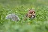 (riccardomaffiodo) Tags: nikon d750 24120 f4 squirrel scoiattolo parcodelvalentino