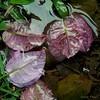 (Lucia Cysneiros) Tags: flor chuva água