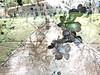 Subtract_0004 (troutcolor) Tags: imagemagick random victoriapark bash spring experiment