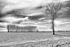 Outside the Choir (drugodragodiego (3 Millions Thanks)) Tags: chignolopo pavia lombardia italy landscape paesaggio trees campagna blackandwhite blackwhite bw biancoenero pentax pentaxk1 k1 pentaxdfa2470mmf28 hdpentaxdfa2470mmf28edsdmwr greatphotographers
