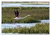 Flamingo world... (Joao de Barros) Tags: joão barros bird animal flamingo wild nature