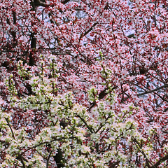 Zipping flowers (Robyn Hooz (away)) Tags: flowers trees alberi spring primavera zoom compressione padova tele poems poesia stagione sogni