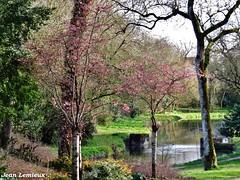 La Rochelle - Parc Charruyer (JeanLemieux91) Tags: fleurs flowers flores rosas pink roses árbol tree arbre la rochelle charentemaritime poitoucharentes france europe march mars marzo 2018 hiver winter invierno