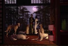 Full View of Full Moon (The Obazee ╰༼=ಠਊಠ=༽╯) Tags: organica 22769 22769~bauwerk rh rhdesignhouse japan fullmoon marukado silveryksakkastudio secondlife sl silveryk sakkastudio kimono geisha metaverse anc happydispatch asian