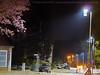 201804_Fruehling_Strasse_Nacht_Laternen_Kirschbluete (Götz Wiedenroth • www.wiedenroth-karikatur.de) Tags: fruehjahr fruehling spring nacht night kirschbluete cherry blossom strasse street foto 2018