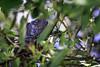 Iguana In Tree (Mabry Campbell) Tags: 2014 fourseasons iguana mexico nayarit puntamita rivieranayarit animal coast coastal fineartphotography green image photo photograph photography stockimage tree tropics f28 mabrycampbell march 2018 march82018 20180308houstoncampbellh6a2247 100mm ¹⁄₈₀₀sec 100 ef100mmf28lmacroisusm
