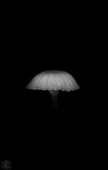Ufo fungi (Takk Heima Fotografia) Tags: fungi canon chile fotografia instagram black hongo hongos mushrooms macro