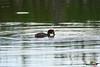 A-LUR_4738 (OrNeSsInA) Tags: trasimeno byrd passignano lago castiglionedellago perugia umbria toscana nature ornessina lucarosi