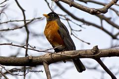 IMG_5023 (nitinpatel2) Tags: bird nature nitinpatel