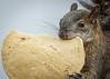 Lunch time (ruimc77) Tags: nikon d810 nikkor afs 200500mm f56e ed vr ardilla esquilo squirrel hora comida ciudad méxico mexico city df cdmx animal life vida