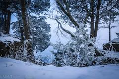 Snow scene (*Ranger*) Tags: nikond3300 winter woodland snow fog mist trees edgarevinsstatepark landscape nature morning