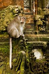 Tourists make you LOL (Triple_B_Photography) Tags: canon eos 7d bali monyet monkey travel temple tourism