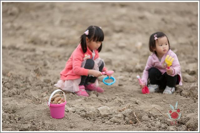 火龍果園星光野餐Ⅱ 找地瓜 烤地瓜 吃地瓜 (10)