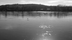 Along_the_Danube_5 (rhomboederrippel) Tags: rhomboederrippel htc onemini april 2018 europe austria loweraustria river danube korneuburg bw monochrome backlight wienerwald