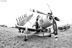 Skyraider (Daniel E. Photography ✈) Tags: airplane skyraider ferté alais ad4 warbird samyang 8mm fisheye ajbs plane aircraft blackandwhite white darktable