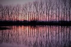 reflection (ralfszepanzik) Tags: sonnenaufgang morgendämmerung sunrise morning red spiegelung reflection refexion vertikal vertical licht light