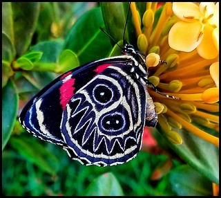 Cores da natureza. #flores #flowers #borboletas #naturalbeauty #natureza #naturephotography #jardim #floreslindas #revistaxapury #eunotg #criacaodedeus #obradivina #instaflowers #instaflores #motox2 #instamotox2 #garden #floricultura #intagram #instalike