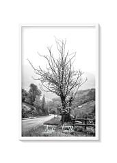 _ATP7204 (anahí tomillo) Tags: nikon naturaleza nature árbol tree lightroom bn paisaje landscape nikond7500 nikkor nikkormacro40mmf28 asturias