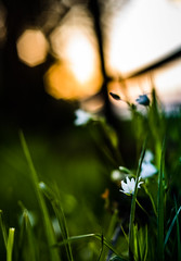 Pretty.. (Emma Yeardley) Tags: pretty flowers floral wildflowers nature bokeh nikon nikond3300 nikon50mm 50mm blur softfocus grass 365 365challenge day122