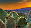 Sedona Sunset (jbalfus) Tags: sedona sonya9 sunset cactus