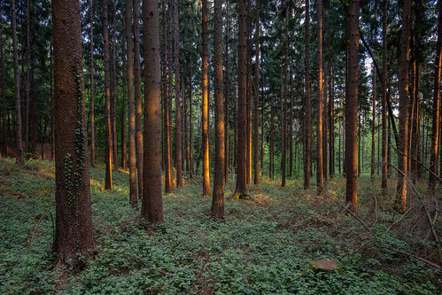 Forest, Kumberg