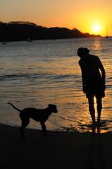 Dog sunset (HockeyholicAZ) Tags: beach playa sand sunset landscape relax ocean dog perro bestfriend puppy beagle costarica nicoya guanacaste tico seca azucar sugarcane hermosa tamarindo coco liberia