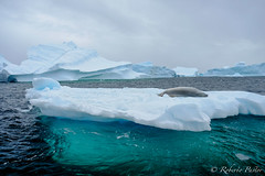 ANT180316-0757 (robertopastor) Tags: antarctica antarctique antarktika antartic antártida fuji robertopastor xt1 xf1655mm aq