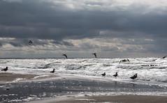 OnTheBeach (patrick.schrimpf) Tags: landscapesnature wustrow mecklenburgvorpommern deutschland möwen strand ostern17 ostsee sturm