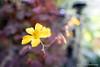 Comin' atcha! (Brian M Hale) Tags: flower flowers botany botanic botanical tower hill garden boylston ma mass massachusetts new england newengland usa indoors laowa macro 15mm f4