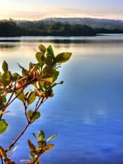 Leafy waters (elphweb) Tags: sun sunset hdr highdynamicrange nsw australia seaside