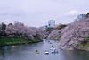 DSCF8882 (吳冠霖) Tags: 日本 japan 橫濱 摩天輪 日本丸 富士山 河口湖 千一景 音樂之森 雪 淺草 雷門 和服 押上 晴空塔 新宿御苑 千鳥淵 櫻花