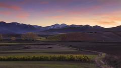 Sunset in the wineyards (Rafael Díez) Tags: españa larioja villardetorre paisaje viñas otoño filtro rafaeldíez arboles verde naturaleza