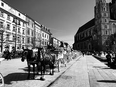 Kraków , dorożki (szeroki wachlarz) Tags: cracow koń dorożki rynekgłówny kraków iphone8 iphone