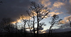 The Trees by the Lake (Benjamin Driver) Tags: tree trees clouds cloud colour sun rise sunrise silhouette lakedistrict ullswater lakeullswater morning february 2018 panorama panoramic symmetry symmetrical