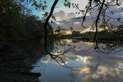 Curbridge Pond (yvonne.macklin) Tags: landscape pond trees sunset canon eos1300d