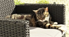 Life is pretty good. (vibeke2620) Tags: cat spring sunshine sun solskin sol forår relaxing