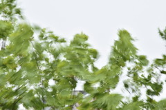 Capturing the Wind (Robin Shepperson) Tags: wind movement trees weather gales motion blur green sky berlin germany d3400 nikon nature white wave air