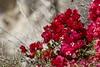 DSC06820 (joeginder) Tags: jrglongbeach lunadabay palosverdes californa pacific coast hiking ocean