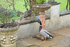 A Quick Break (Deepgreen2009) Tags: pair ducks mallard eggs sitting brooding break patio seed feeding fowl