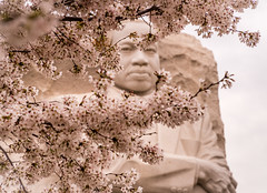 Cherry Blossoms at Martin Luther King Jr. Memorial (YL168) Tags: 攝影發燒友 cherryblossoms martinlutherking tidalbasin washingtondc martinlutherkingjrmemorial