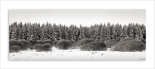 Hautes Fagnes - Winterscape
