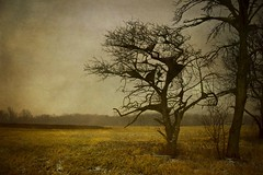 Dali Tree (Bo Dudas) Tags: dali salvador trees field prairie horizon mystery pale muted surreal surrealism abstract grass nature outdoors