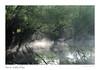 La brume s'accroche aux arbres (Bruno-photos2013) Tags: brume brouillard maineetloire anjou patache paysageligérien paysage paysdeloire loire landscape river eau water arbres reflets reflection