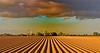 Terres de Folies (JDAMI) Tags: folies pommesdeterre plants plantations santerre somme 80 picardie france ligne nuages clocher nikon d600 tamron 2470
