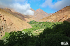 Green valley (morbidtibor) Tags: africa northafrica morocco desert atlas atlasmountains toubkal trekking hiking valley