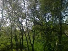 Retours solitaires (Gilbert-Noël Sfeir Mont-Liban) Tags: solitude soir evening bäume arbres trees kesserwan montliban liban mountlebanon lebanon