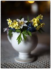 Mitakon Image - Step One (Krogen) Tags: norge norway norwegen akershus ullensaker jessheim krogen blomster flowers mitakonspeedmaster f095